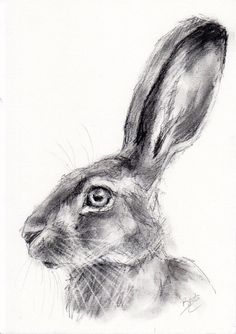 Original a4 #wildlife charcoal sketch of a hare #animal drawing by #belinda ellio,  View more on the LINK: 	http://www.zeppy.io/product/gb/2/291907149847/
