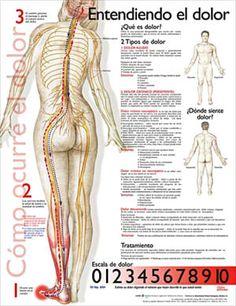 Pain: Entiendo el dolor anatomy poster for exam room or classroom
