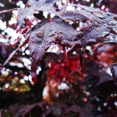 #rain #leaves #trees #forest Rain, Trees, Leaves, Mood, Photography, Instagram, Rain Fall, Photograph, Photo Shoot