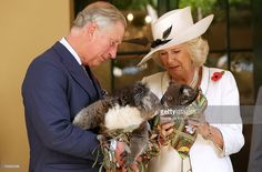Camilla, Duchess of Cornwall and Prince Charles, Prince of Wales hold koalas at Government House on November 7, 2012 in Adelaide, Australia. The Royal couple are in Australia on the second leg of a Diamond Jubilee Tour taking in Papua New Guinea, Australia and New Zealand.