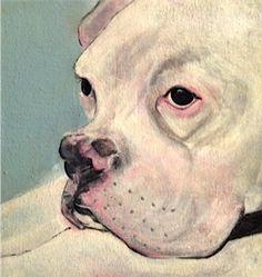 Grumpy Dog Portrait    Shannon Knopke Fine Art