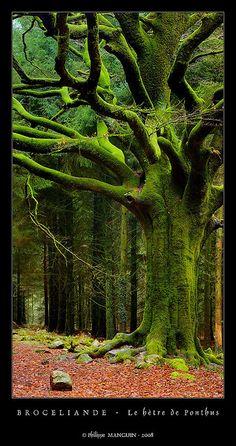 Broceliande - le hêtre de Ponthus (3) by philippe MANGUIN photographies, via Flickr Bretagne France (Brittany)