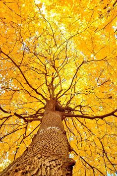 """"""""""" Shades Of Yellow Color Names For Your Inspiration – Going To Tehran """""""" Trucos imprescindibles para evitar mostrar pinceladas al pintar muebles """""""" Beautiful World, Beautiful Places, Trees Beautiful, Simply Beautiful, Beautiful Pictures, Foto Art, Shades Of Yellow, Happy Colors, Bright Colors"""