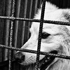 photo animals | free download photobank of black and white photos