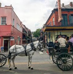 The best way to explore New Orleans famous French Quarter is with Royal Carriages! http://ift.tt/1P4va0u #Repost @oddgal  #streetsightings #neworleans #frenchquarter