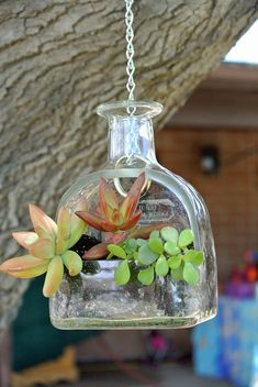 Patron Tequila Hanging Planter or Bird Feeder / Hanging Succulent Planter / Patron Bottle Planter Gift / Hanging Plants Succulent Terrarium Very hard to find and even harder to make! Patron tequila bottle handcrafted into a hanging planter. Makes a unique Liquor Bottle Crafts, Wine Bottle Art, Patron Bottle Crafts, Patron Bottles, Wine Bottles, Liquor Bottle Lights, Patron Tequila, Hanging Succulents, Hanging Planters