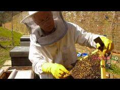 """Bee Pollen"" A Superfood Health Documentary Royal Jelly Benefits, Health Documentaries, Bee Pollen, Homeopathy, Bee Keeping, Superfood, Spring Time, Natural Remedies, Herbalism"