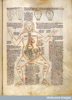 Anatomy of pregnant woman labelled with ailments and the four foetal positions, Wellcome Library, London,  MS 49, Apocalypse