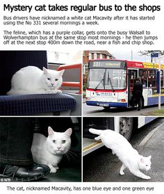 Now, if he took the bus BACK, that would be really impressive
