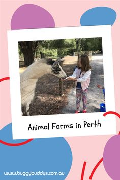 Animal Farms in Perth provide a fun day out for the whole family. Kids of all ages will love petting and hand feeding the furry, feathered and sometimes scaly residents! We've put together a list of our favourite animal farms found all around Perth and WA's South-West region. Perth Australia, Australia Travel, Western Australia, Animal Farms, Australian Road Trip, Kings Park, Fun Days Out, Best Western, Great Barrier Reef