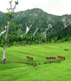 Fairy Meadows Kel, Neelum valley Azad Kashmir, Pakistan