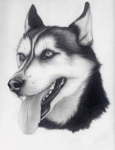 Husky by alishamarie12