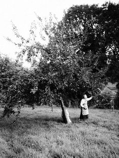 Picking apples.