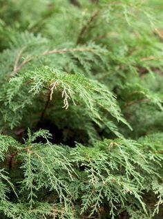 Vinkkejä puun istuttamiseen