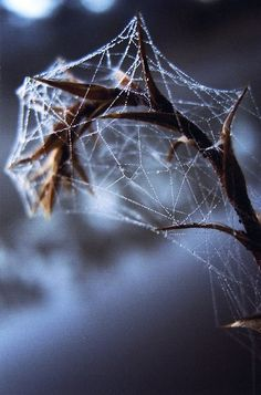 Frozen Spiderweb | Amazing Pictures - Amazing Pictures, Images, Photography from Travels All Aronud the World