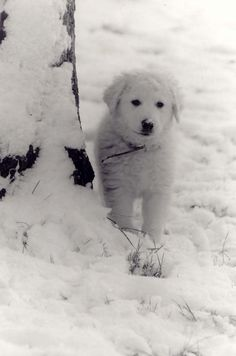 Just like he's using the snow as camouflage. Super cute winter dog.   #winter #dogs