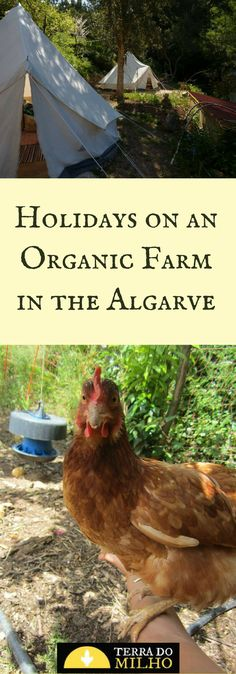 Holiday on an organic farm in the Algarve. Summer, spring and autumn holiday destination in Monchique, Algarve, Portugal. Holiday Destinations, Travel Destinations, Farm Stay, Organic Farming, Algarve, Permaculture, Drinking Water, Tourism, Portugal