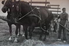 Afbeeldingsresultaat voor paard en kar vroeger