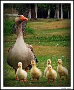 Mother Goose with Doris, Lucille, Muriel, Laurette and Violet.