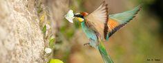 Lekcje z natury - program dla nauczycieli Program, Bird, Education, Animals, Geography, Animales, Animaux, Birds, Teaching