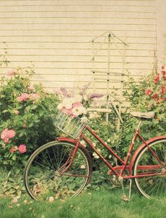 There is just something sweetly nostalgic about vintage bicycles with fresh flowers in the basket.  #TrishaBrink