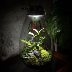 キャプション→JIB船坂アトリエ #JIB#苔あかり #モスライト#mosslight #LED#Lightning#コケ#moss#terrarium…