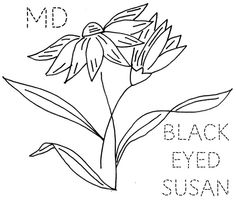 Maryland Black-Eyed Susan by turkeyfeathers, via Flickr