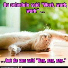.nap nap nap lol luvie cutie funny kitty