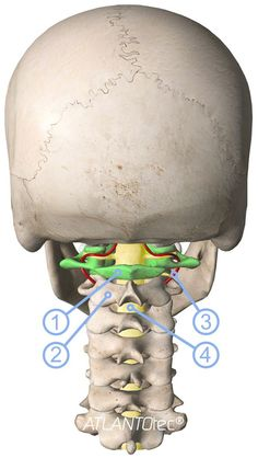 The 7 cervical vertebrae and atlas correction Health And Nutrition, Health Tips, Health Fitness, Massage Benefits, Health Benefits, Migraine, Chakra Meditation, Anatomy And Physiology, Alternative Health