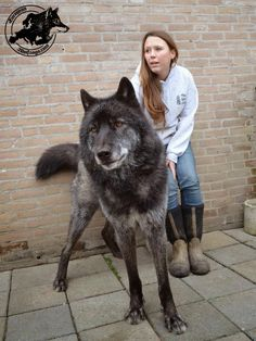 5 Most Amazing Wolf Hybrid You Have Ever Seen -  LOVE the 3rd wolf hybrid :)