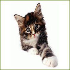 Tienda online del gato