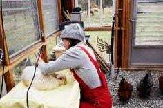 Ambika Conroy shearing an Angora rabbit