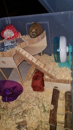 Hamster Bin Cage, Gerbil Cages, Hamster Life, Baby Hamster, Hamster Toys, Hamster Stuff, Diy Mouse Toys, Dwarf Hamster Care, Hamster Species