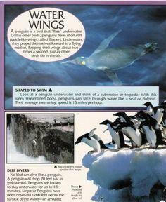 Penguin Facts | Penguin Place Penguin Facts, Penguins, Penguin