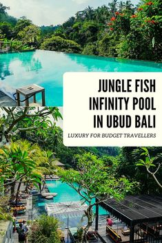 If you want to treat yourself to a day like a celebrity at one of the most spectacular infinity pools in Bali without breaking the bank then Jungle Fish is the perfect solution. Discover how you can have all of the luxury for none of the cost! Infinity Pools, Ubud, Bali Travel, Luxury Travel, Travel Abroad, Celebrity Infinity, Luxury Swimming Pools, Wanderlust, Cruise Vacation