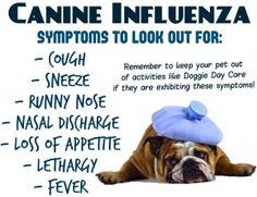 Latest Concern For Dog Owners: Canine Flu