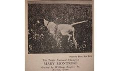 The Development of the American Pointer - Project Upland
