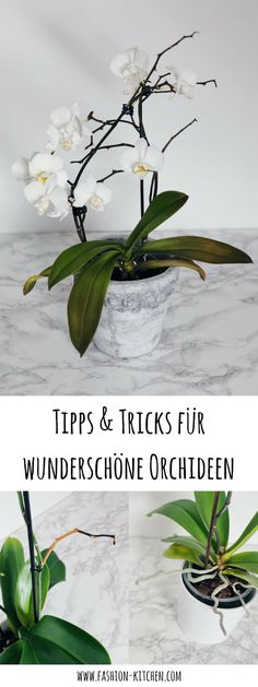 Orchideen Tips & tricks for beautiful and healthy orchids - Fashion Kitchen Landscaping Tips: 6 Basi Orchid Roots, Orchid Leaves, Orchid Plants, Exotic Plants, Exotic Flowers, Tropical Flowers, Garden Care, Hair Rainbow, Tea Plant