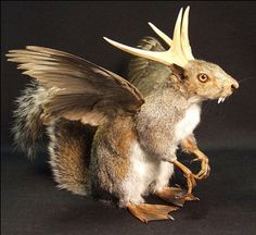 "tentaclegarden: "" theabsintheconspiracy: The Wolpertinger """
