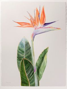 original watercolor painting on full sized x Arches cold-pressed watercolour paper and archivally float mounted and framed in solid birch x with museum glass Bird Of Paradise Tattoo, Birds Of Paradise Plant, Protea Art, Watercolor Leaves, Watercolor Flowers, Watercolor Paintings, Tattoo Fleur, Flower Line Drawings, Tropical Art