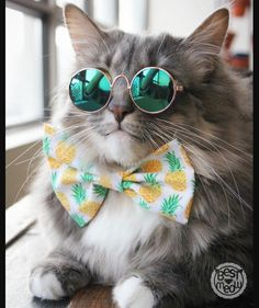Top 25 Cats in Glasses Cute Cats And Dogs, Cute Cats And Kittens, I Love Cats, Cool Cats, Kittens Cutest, Pretty Cats, Beautiful Cats, Animals Beautiful, Cute Baby Animals
