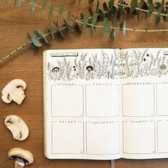 Bullet journal weekly layout, plant doodles, mushroom doodles. | @shouthuzzahdoodles