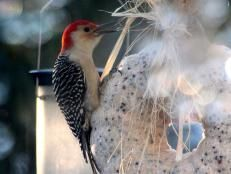 Don't forget the backyard wildlife during the winter months. Check out these easy recipes for suet and dried corn, plus find more tips for feeding birds and squirrels.