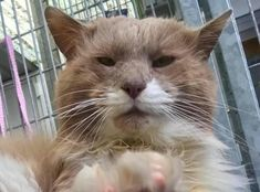 Colin is a stunningly handsome gentleman looking for a new home. Colin came into RSPCA care after spending many years living on the streets . Cattery, Scratching Post, White Cats, Go Outside, Snuggles, Dog Cat, Handsome, Blue And White, Pets