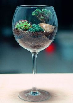 If you still do not have a terrarium in your home, this will be your time to do it. You can find many terrarium ideas as they are really present in most Mini Terrarium, How To Make Terrariums, Garden Terrarium, Succulent Terrarium, Succulent Ideas, Glass Terrarium, Indoor Succulent Garden, Indoor Mini Garden, Glass Planter
