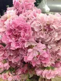 Gorgeous shades of pink scabiosa Exotic Flowers, Amazing Flowers, Pretty Flowers, Pretty In Pink, Pink Flowers, Pink Flower Arrangements, Cool Picks, Pink Nature, Rose Cottage