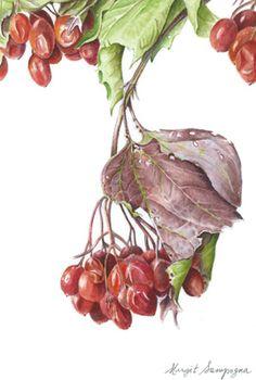 Rocky Mountain Society of Botanical Artists: Holiday Botanical Art