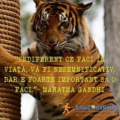 Mahatma Gandhi, Animals, Instagram, Animales, Animaux, Animal, Animais