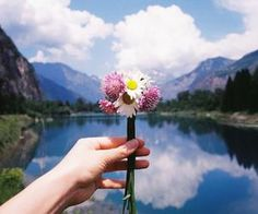 #nature #still #peaceful #flowers #mountains