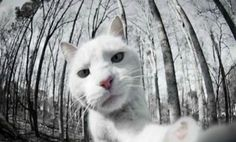 12 Animals With Amazing Selfies - Recognize Yourself?
